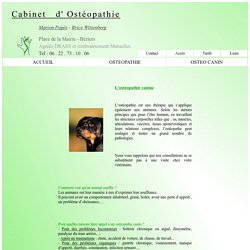 Ostéopathie canine : chien / chat