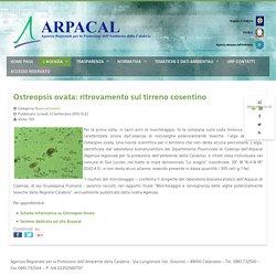 ARPACAL_IT 12/09/16 Ostreopsis ovata: ritrovamento sul tirreno cosentino
