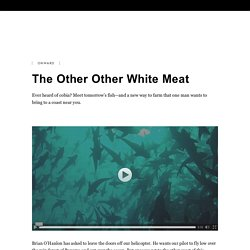 The Other Other White Meat: Farmed Fish