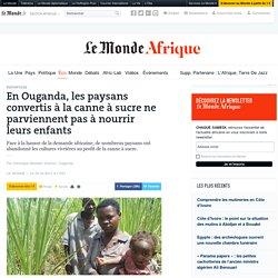 En Ouganda, les paysans convertis à la canne à sucre ne parviennent pas à nourrir leurs enfants