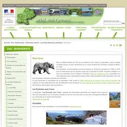 Ours brun - DREAL Midi-Pyrénées