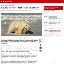 L'ours polaire de l'Arctique ne va pasbien