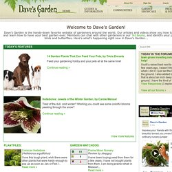 Tips and Advice on Outdoor Gardening, Flower Gardens, Plants, & Seeds - Dave's Garden