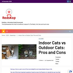 Indoor Cats vs Outdoor Cats: Pros and Cons