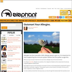 Outsmart Your Allergies