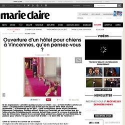Ouverture d'un hôtel pour chiens à Paris : en fait-on trop ?