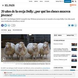 20 años de la oveja Dolly: ¿por qué los clones mueren jóvenes?