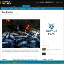 Overfishing Essays (Examples)