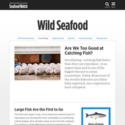 Effects of Overfishing on Wild Seafood Populations from the Seafood Watch Program at the Monterey Bay Aquarium