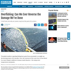 Overfishing: Can We Ever Reverse the Damage We've Done?