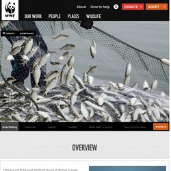 Overfishing WWF