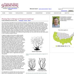 Pruning Tips to Salvage an Overgrown Landscape