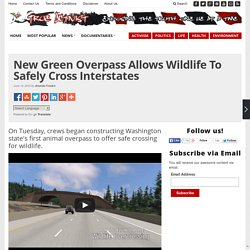 New Green Overpass Allows Wildlife To Safely Cross Interstates