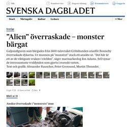 """""""Alien"""" överraskade – monster bärgat"""