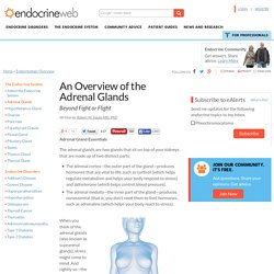 An Overview of the Adrenal Glands - Beyond Fight or Flight