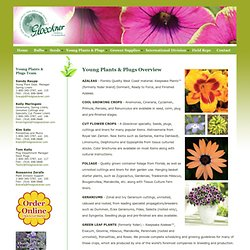 Young Plants and Plugs Overview - Fred C. Gloeckner & Company Inc. - Bulbs, Seeds, Plants, Supplies from World Wide Sources