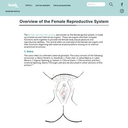 Overview of the Female Reproductive System