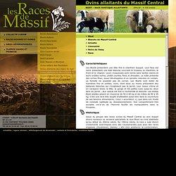 Races ovines allaitantes du Massif Central : Bizet