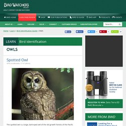 Owls Archives » Bird Watcher's Digest