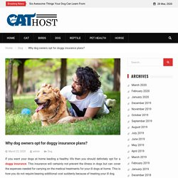 Why dog owners opt for doggy insurance plans? -