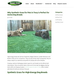 Why Pet Owners Should Choose Synthetic Grass for Pets in Tracy