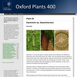 Oxford University Plants 400