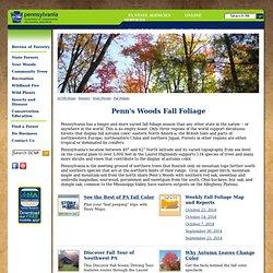 DCNR-Fall Foliage