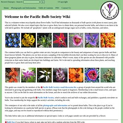 Welcome to the Pacific Bulb Society Wiki