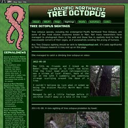 The Pacific Northwest Tree Octopus