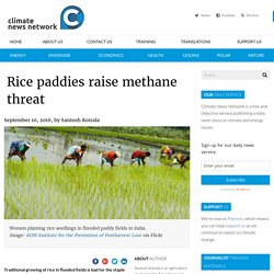 Rice paddies raise methane threat - Climate News NetworkClimate News Network