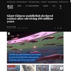 Giant Chinese paddlefish declared extinct in China