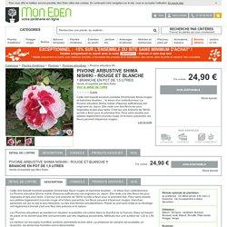 Paeonia suffruticosa, Pivoine arbustive Shima nishiki - Mon Eden