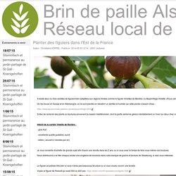 Planter des figuiers dans l'Est de la France