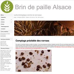 Lutte biologique contre la varroase