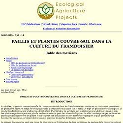 paillis et plantes couvre-sol dans la culture du framboisier