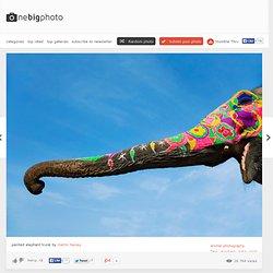 Painted Elephant Trunk