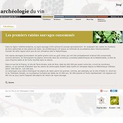 Le vin: du paléolithique à maintenant