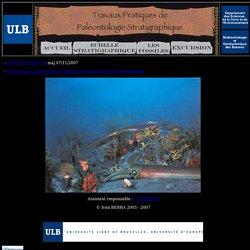 Paléontologie stratigraphique
