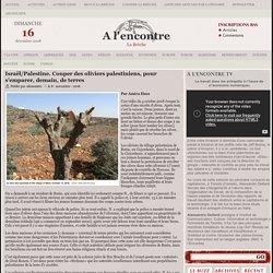 Couper des oliviers palestiniens, pour s'emparer, demain, de terres