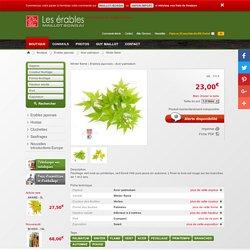 Acer palmatum WINTER FLAME de Maillot-Erable - La boutique MAILLOT-ERABLE