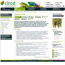 CIRAD - Palmier à huile