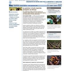 FAO 24/11/03 Le palmier à huile hybride prospère au Kenya