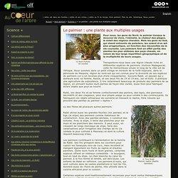 Le palmier : une plante aux multiples usages - Science + - Au coeur de l'arbre
