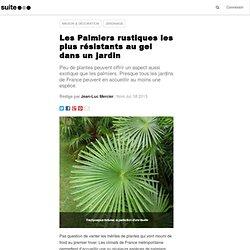 Les Palmiers rustiques les plus résistants au gel dans un jardin