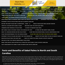 Facts and Benefits of Sabal Palms in North and South Carolina