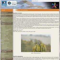 Autour des palombes - observatoire-rapaces.lpo.fr