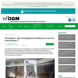 INFOGM 28/07/20 Paludisme : des champignons OGM pour tuer les moustiques ?