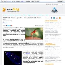 SANTEBLOG 14/06/15 L'ANOPHÈLE: Vecteur du paludisme mais également de bactéries – APHM