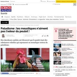 Paludisme : les moustiques n'aiment pas l'odeur du poulet !
