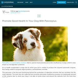 Promote Good Health In Your Dog With Pancreplus